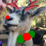 An Interview With The Disneyland Goats: Holiday Edition