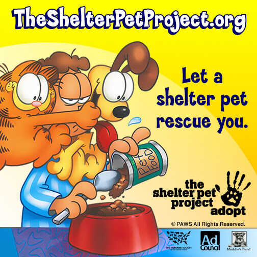complete your family with a shelter pet