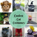 Coolest Cutest Cat Costumes Because Your Cat Wants To Dress Up Too