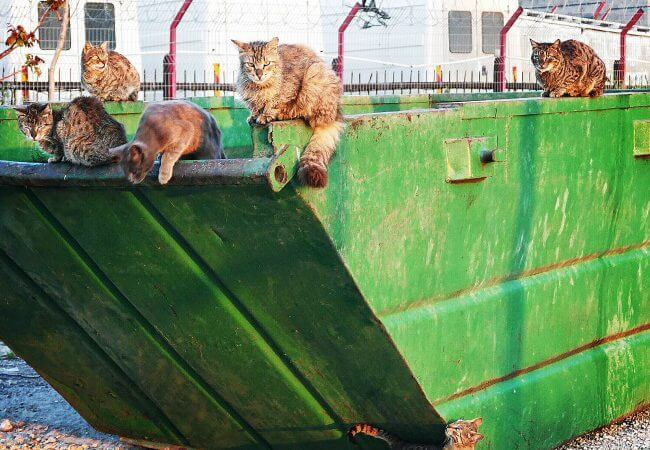 A Week's Worth of Feral Israeli Cats