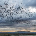 Would You Travel to See a River of Bats? With a Side of Spa Luxe?