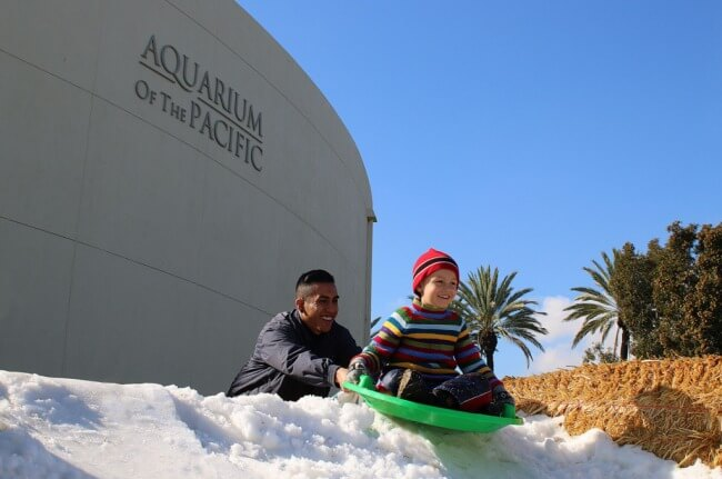 Real Snow at Aquarium Of The Pacific Aquarium Holidays!