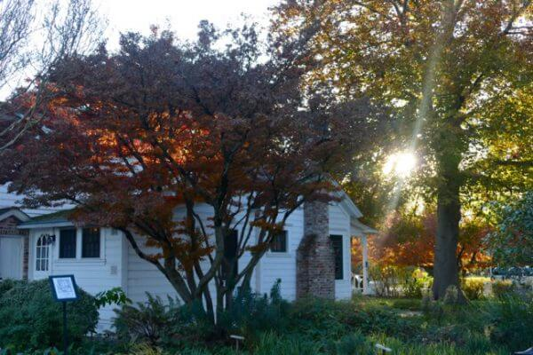 Luther Burbank Home And Gardens Bloom With Kindly Spirits
