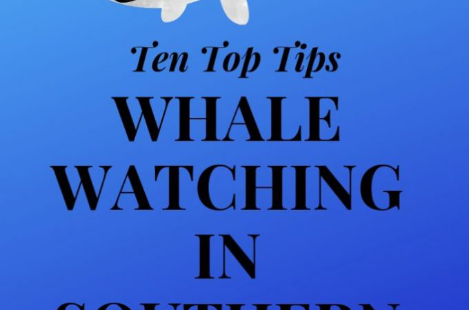 Everything You Need to Know About Whale Watching in Southern California