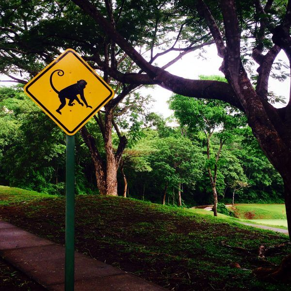 Monkey Crossing Sign Costa Rica