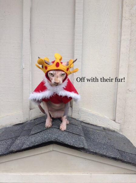queencostumeforcats