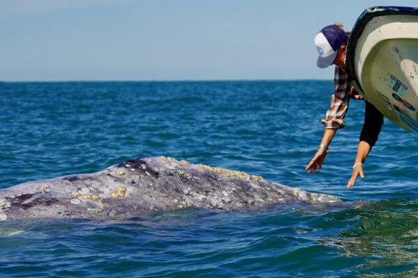 whale watching in Baja on Magdalena Bay